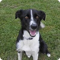 Adopt A Pet :: Tyro Adoption Pending - Midwest (WI, IL, MN), WI