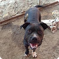 Adopt A Pet :: Jersey Girl - Fowler, CA