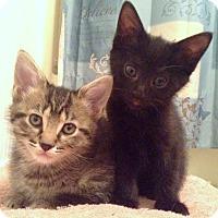 Adopt A Pet :: Gizmo/Gidget - Chattanooga, TN
