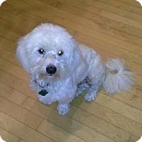 Adopt A Pet :: Humphrey - San Francisco, CA