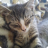 Adopt A Pet :: Donnie - Mount Laurel, NJ