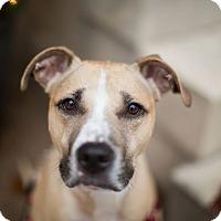 Adopt A Pet :: Brynn - Reisterstown, MD