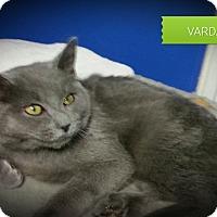 Adopt A Pet :: Varda - Fairborn, OH