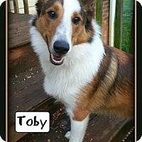 Adopt A Pet :: Toby - Doylestown, PA