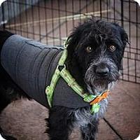 Adopt A Pet :: Abbott - Henderson, NV