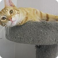 Adopt A Pet :: Gator - Manning, SC
