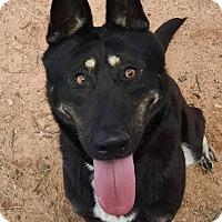 Adopt A Pet :: Gypsy - Nashua, NH