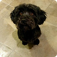 Adopt A Pet :: Dylan - Pittsburgh, PA