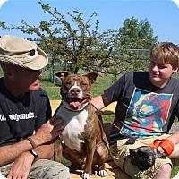 Adopt A Pet :: Jabbers - Elyria, OH
