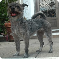 Adopt A Pet :: Zoe - Encino, CA