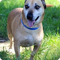Adopt A Pet :: Bubba - Waldorf, MD