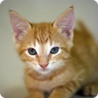 Adopt A Pet :: Wubbo - Austin, TX