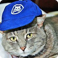 Adopt A Pet :: Gary - Duluth, GA