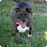 Adopt A Pet :: Cleo - Troy, MI