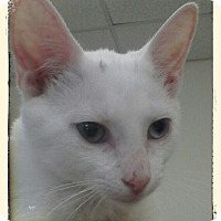 Adopt A Pet :: Winthrop - Trevose, PA