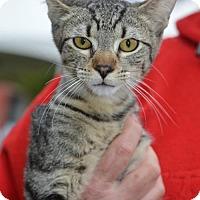 Adopt A Pet :: Milo - Vacaville, CA