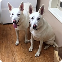 Adopt A Pet :: Sassy and Angel (SC) - Hooksett, NH