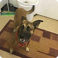 Adopt A Pet :: Mali - Hopewell, VA