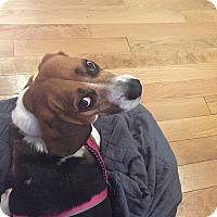 Adopt A Pet :: Peggy - Norfolk, VA
