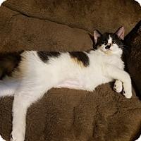 Adopt A Pet :: Rita Lynn (bonded w Pikachu) - Warren, MI
