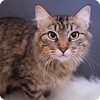 Adopt A Pet :: Amber - Warrenton, MO