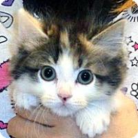 Adopt A Pet :: 328657 - Wildomar, CA