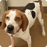 Adopt A Pet :: Hambone - Wichita, KS