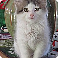 Adopt A Pet :: Kiki Dee - Seminole, FL
