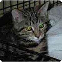 Adopt A Pet :: Fisher - Arlington, VA
