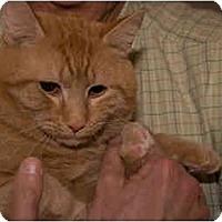Adopt A Pet :: Gingersnap - Alexandria, VA