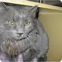 Adopt A Pet :: Fiona - Warminster, PA
