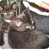 Adopt A Pet :: Troy & Hines - Acme, PA