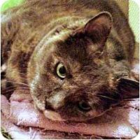 Adopt A Pet :: Moe - Alexandria, VA