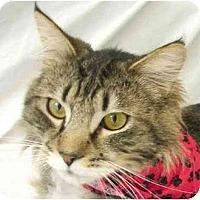 Adopt A Pet :: Mischeif - Davis, CA