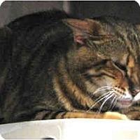 Adopt A Pet :: Sahara - Davis, CA