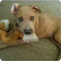 Adopt A Pet :: Diego - Arlington, TX