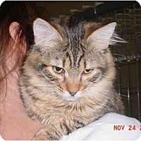 Adopt A Pet :: Cheech - Pendleton, OR