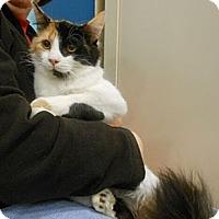 Adopt A Pet :: Karen - Reston, VA