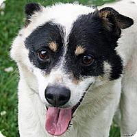 Adopt A Pet :: Gus - Schenectady, NY