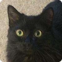 Adopt A Pet :: Tenny - Winchester, CA