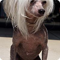 Adopt A Pet :: Pinki-Adoption pending - Bridgeton, MO
