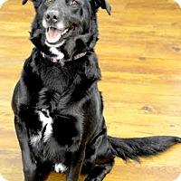 Adopt A Pet :: Bowie - Lake Odessa, MI