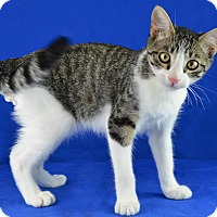 Adopt A Pet :: Jetson - Carencro, LA