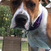 Adopt A Pet :: Buddy (Dad of Sap pups) - Whitestone, NY