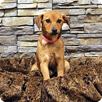 Adopt A Pet :: Angel - Waldorf, MD