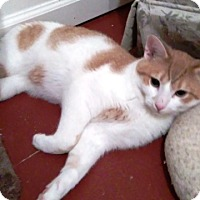 Adopt A Pet :: GETTI - Amherst, OH