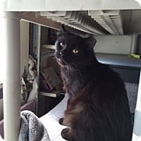 Adopt A Pet :: Bob - Covington, KY