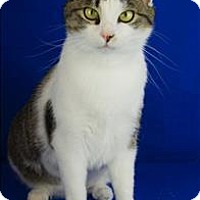 Adopt A Pet :: Cleo - Sherwood, OR
