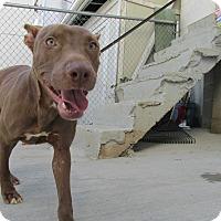 Adopt A Pet :: Petey - Baltimore, MD