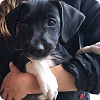 Adopt A Pet :: Magnolia (11 lb) Video! - SUSSEX, NJ